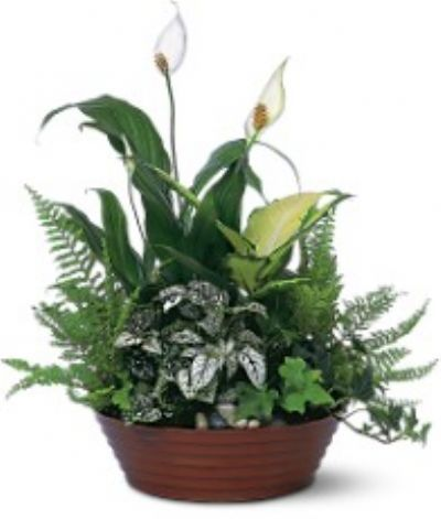 Florist Designed Plants in a Basket, birthday ideas, birthday flower ideas, birthday flowers