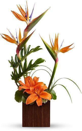 contemporary floral arrangements, tropical floral arrangement, Birds of Paradise, orange lilies
