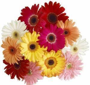 special gerbera daisies GTA