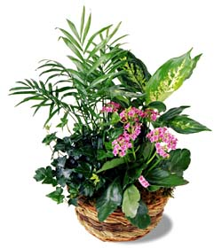Custom Design and Delivery of Plants in Toronto