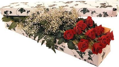 12 Roses with Babies Breath, Boxed