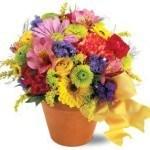 seasonal blooms, carnations, daisy, alstroemeria, spray mums