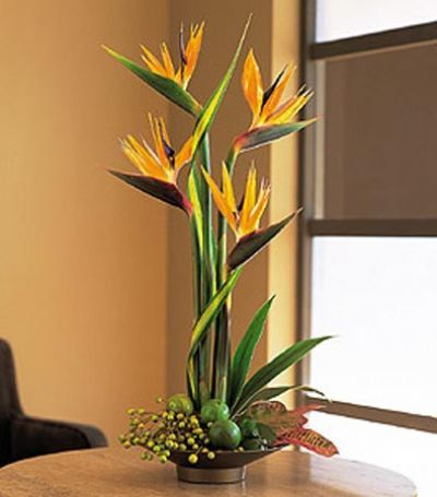Tropical Flowers for Delivery Toronto